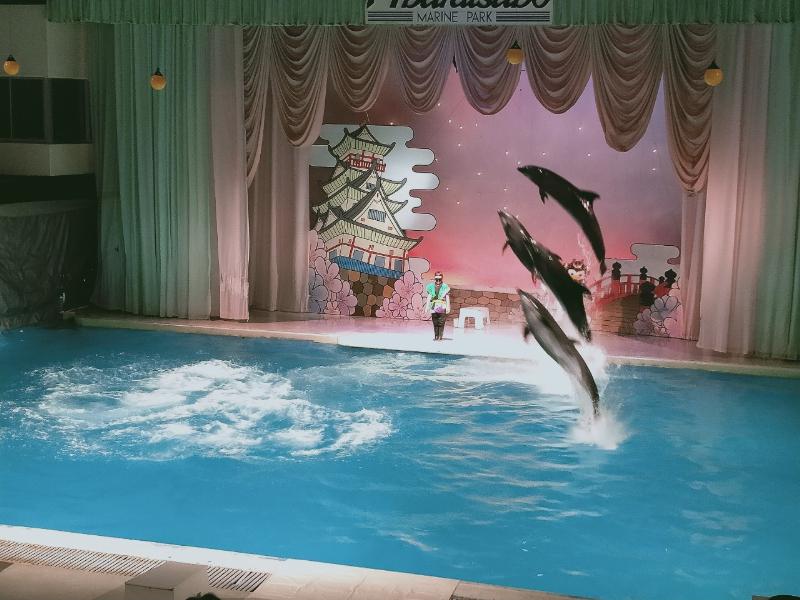 京急油壺マリンパーク イルカのショー(ジャンプ)