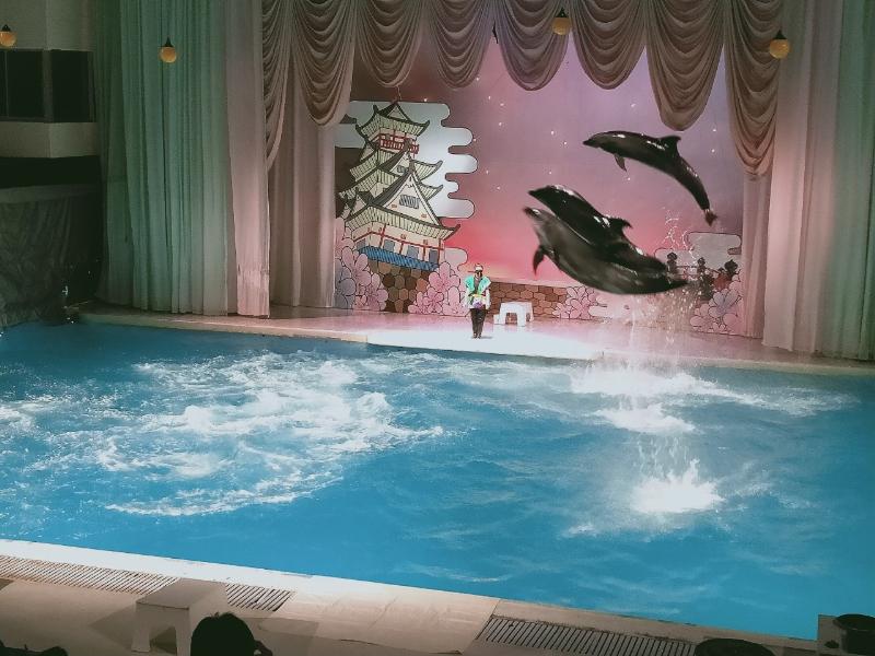 京急油壺マリンパーク イルカのショー